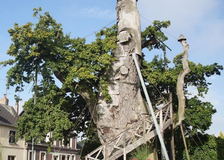 Le Chêne D'allouville Raconté Aux Enfants à Allouville Bellefosse