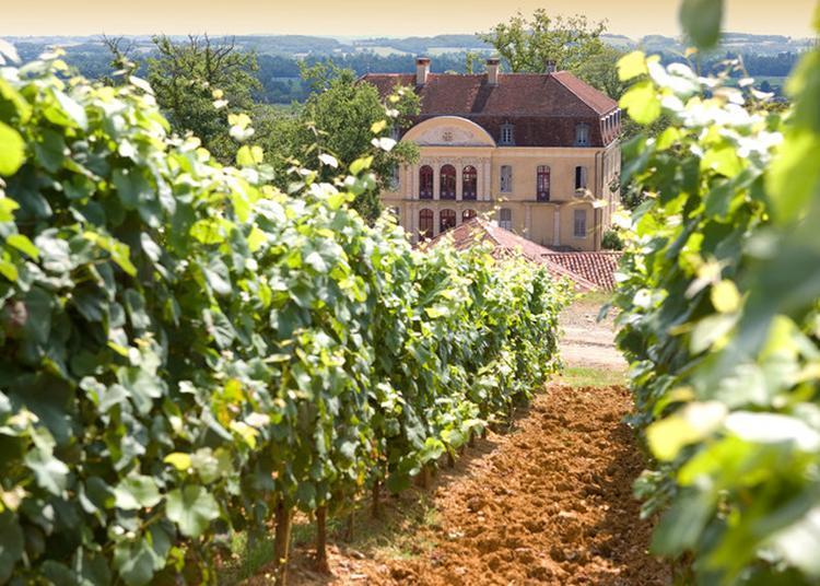 Le Chêne, élément Majeur De Notre Patrimoine | Agroforesterie, Vignes, Terroirs Et Paysages Culturels à Castelnau Riviere Basse