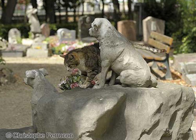 Le Cimetiere Des Animaux A Asnieres à Asnieres sur Seine