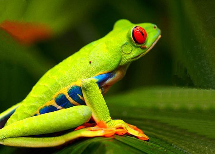 Le Costa Rica à Varces Allieres et Risset