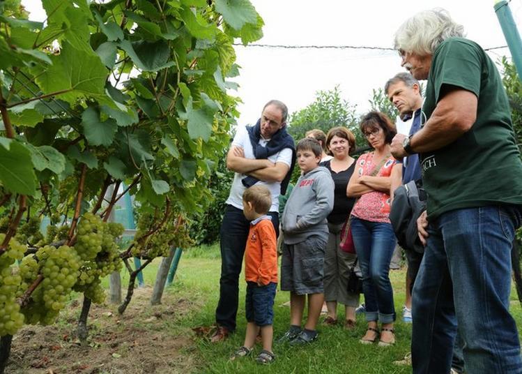Le Côteau Du Braden : De La Vigne Au Vin à Quimper