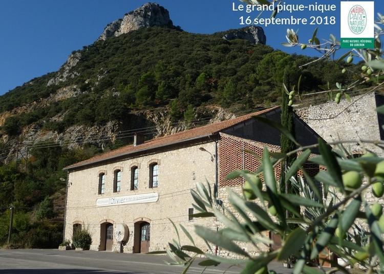 Le Grand Pique-nique : Venez Savourer Votre Parc Du Luberon à L'Écomusée De L'olivier à Volx !
