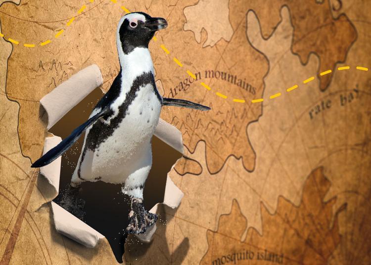 Le long voyage du pingouin vers la jungle à Sarge les le Mans