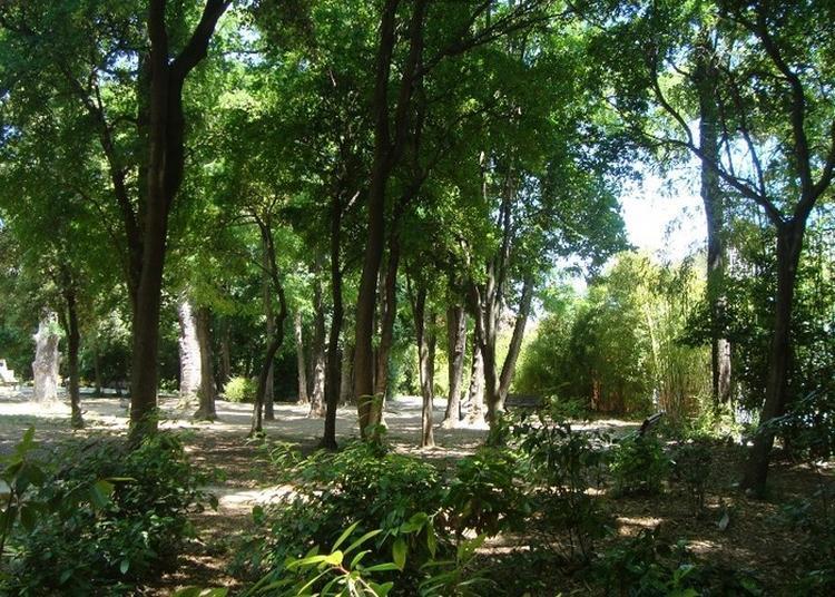 Le Parc Magnol, Un Patrimoine Naturel Pour Apprendre Sur Notre Relation à La Nature? à Montpellier