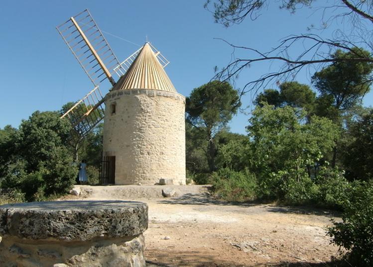 Le Sentier Des Moulins D'alphonse Daudet à Fontvieille
