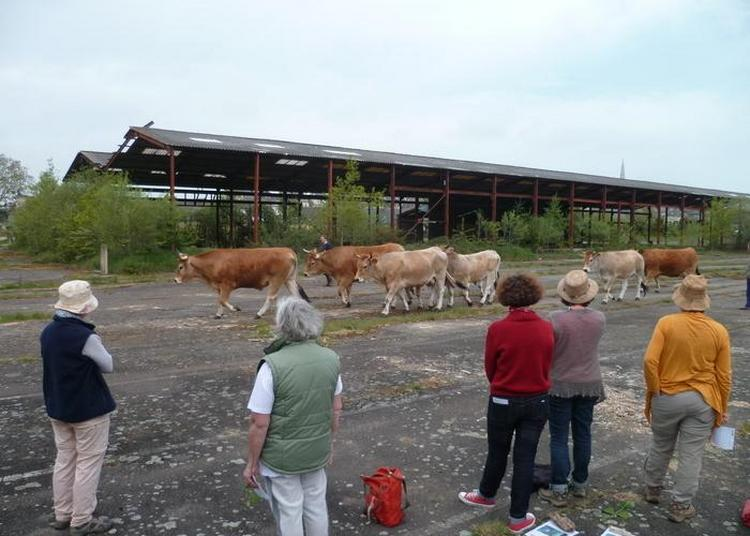 Le Transformateur, Histoire Collective D'une Ancienne Friche Industrielle à Saint Nicolas de Redon
