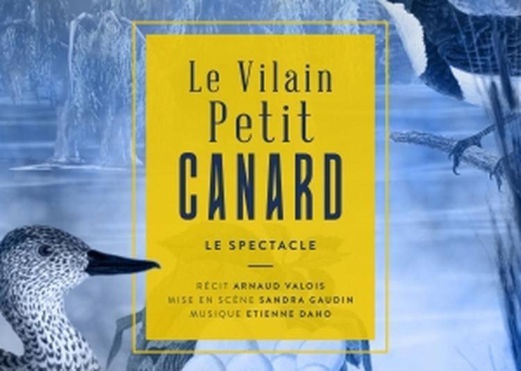 Le Vilain Petit Canard à Lille