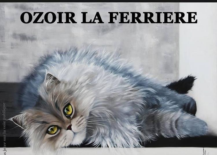 Les accros du chat à Ozoir la Ferriere