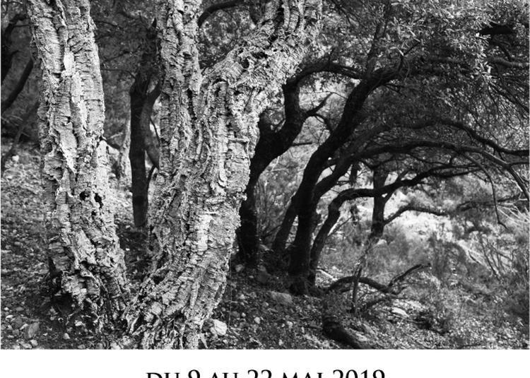 Les arbres aussi étaient bibliques (2) à Paris 4ème