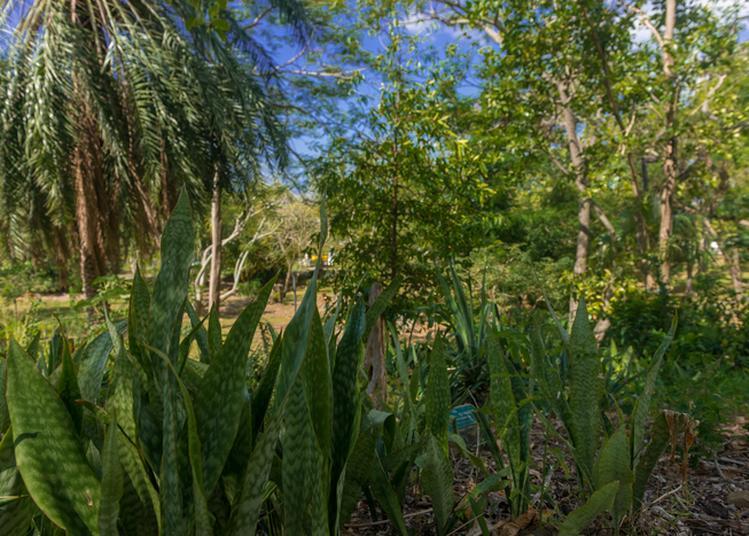 Les Arbres Du Jardin Botanique En Quizz à Basse Terre