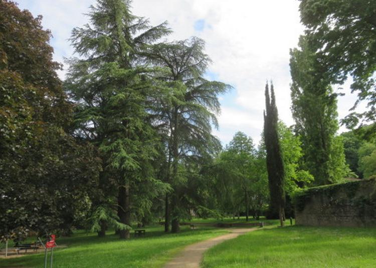 Les Arbres Du Parc Des Monts D'or à Albigny sur Saone
