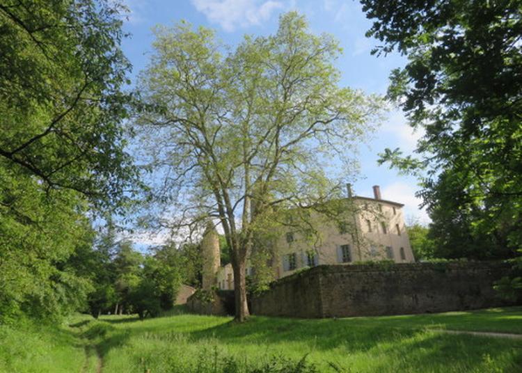 Les Arbres Remarquables Du Parc Du Château De Curis à Curis au Mont d'Or
