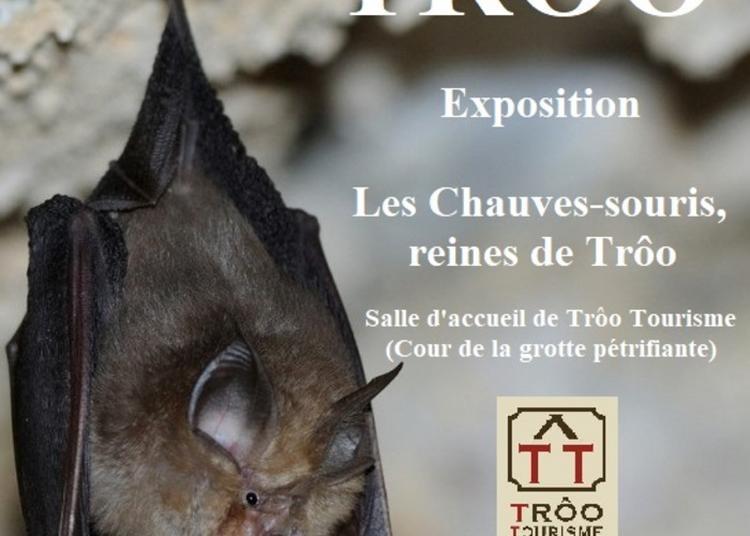 Les Chauve-souris De Trôo à Troo