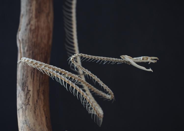 Les Collections D'histoire Naturelle à Tours