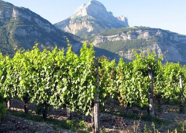 Les Dernières Vignes à Saint Nazaire les Eymes