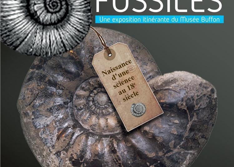 Les Fossiles Landais S'exposent ! à Dax
