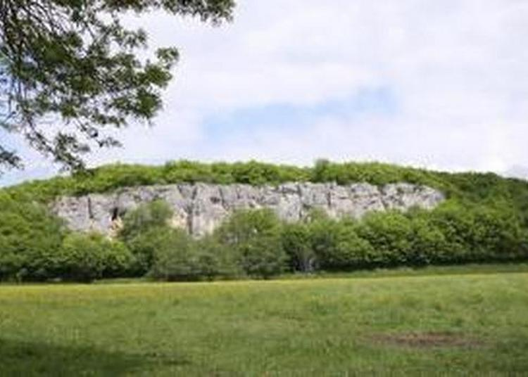 Les Fossiles, Un Trésor À Protéger à Auxerre