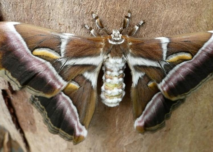 Les Insectes Au Musée à Le Mans