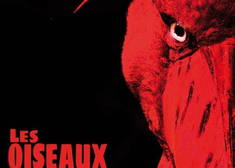 Les Oiseaux: D'Après Aristophane à Paris 19ème
