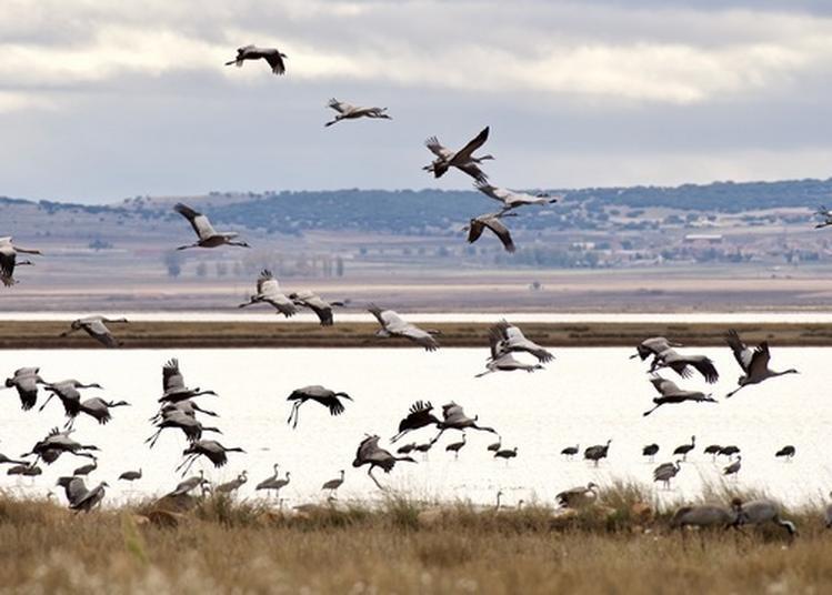 Les Oiseaux Lagunaires à Bouzigues