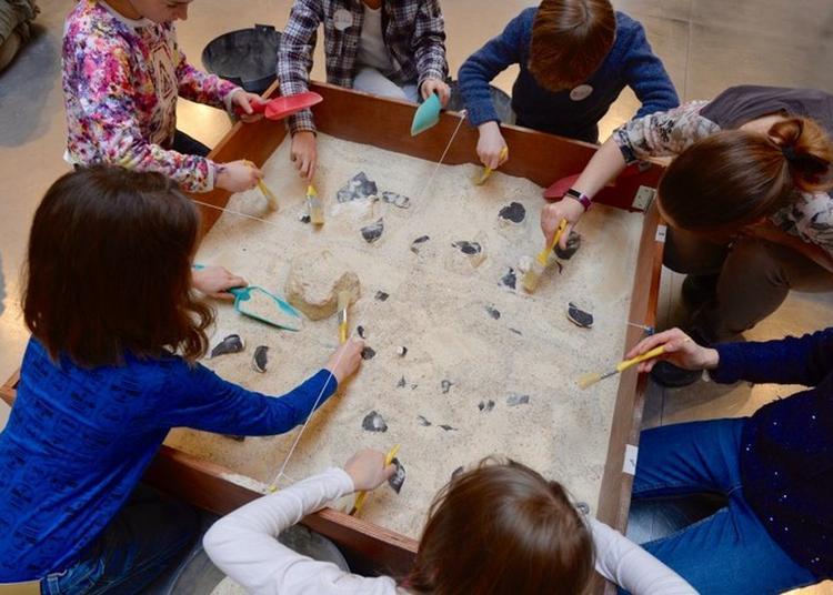 Les P'tits Paléontologues à Dax