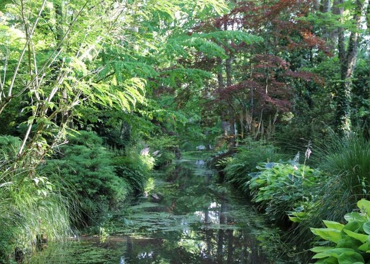 Les Plantes Européennes à L'arboretum à Meung sur Loire