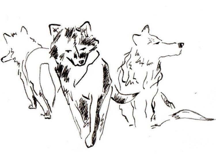 Les quatre loups à Avignon