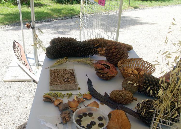 Les Relations Entre Jardins Botaniques à Antibes