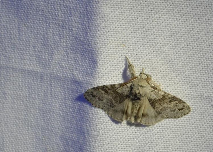 Miellée Et Papillons De Nuit à La Roche sur Yon