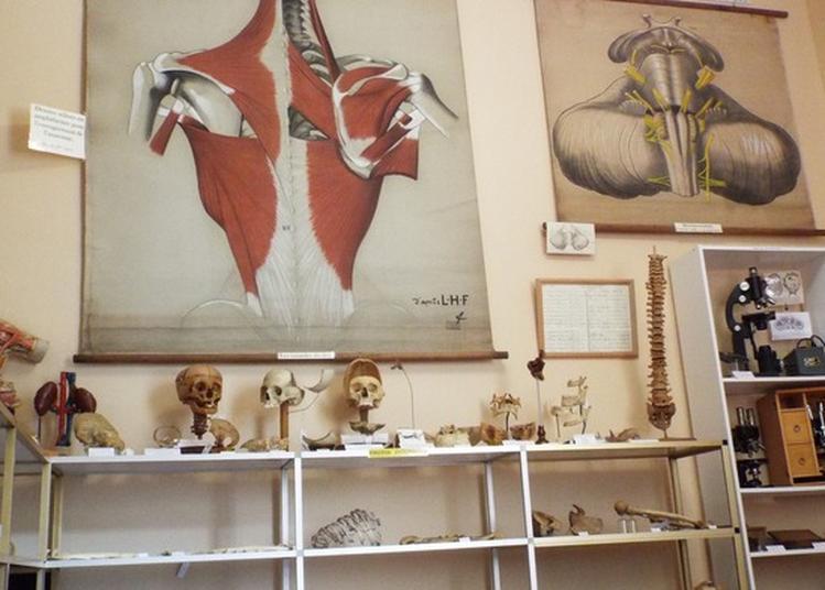 Musée De La Chirurgie Du Professeur Christian Cabrol à Myennes
