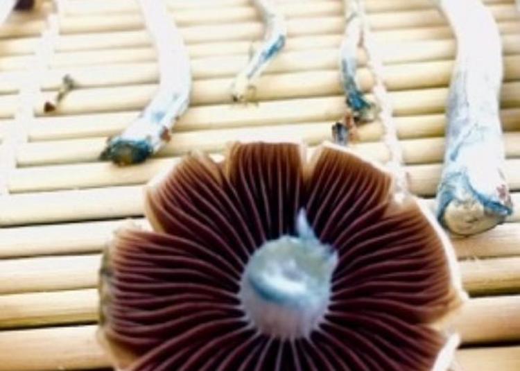 Mushroom Riot à Issy les Moulineaux