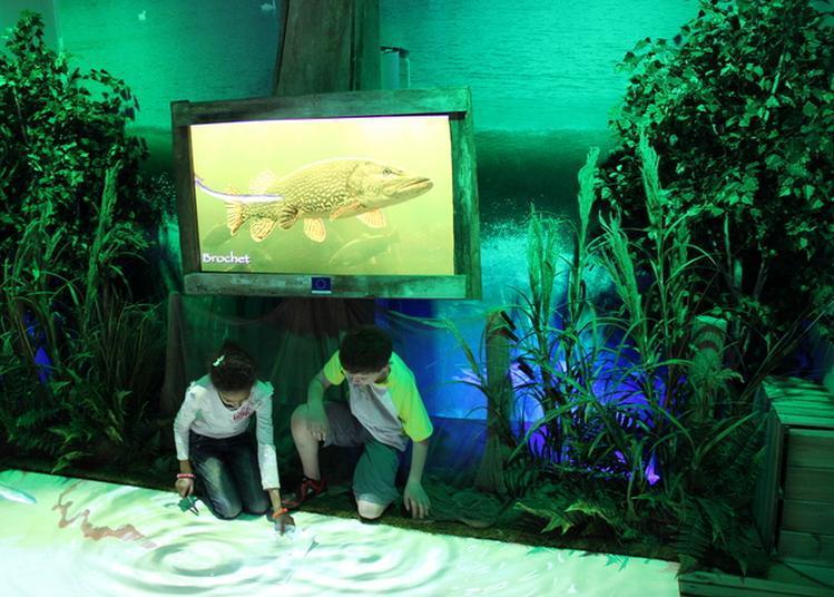 Nature Et Interactivité Au Programme! à Pont de Vaux