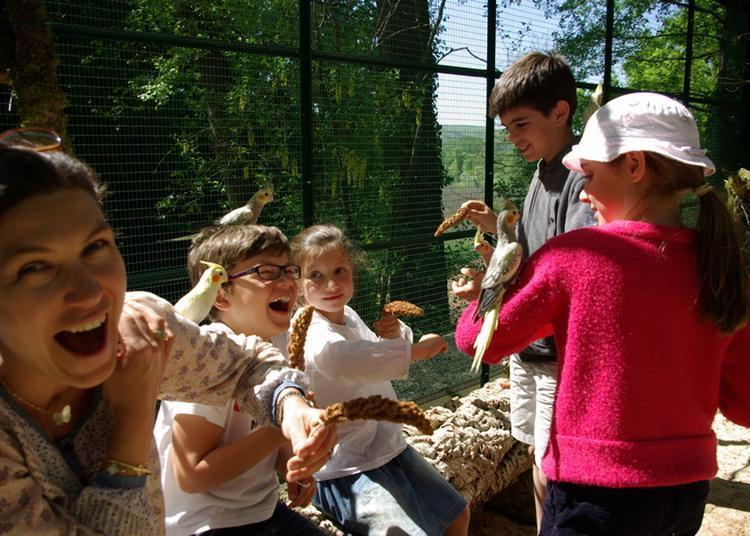 Nourrissage Des Oiseaux Exotiques à Castelnaud la Chapelle