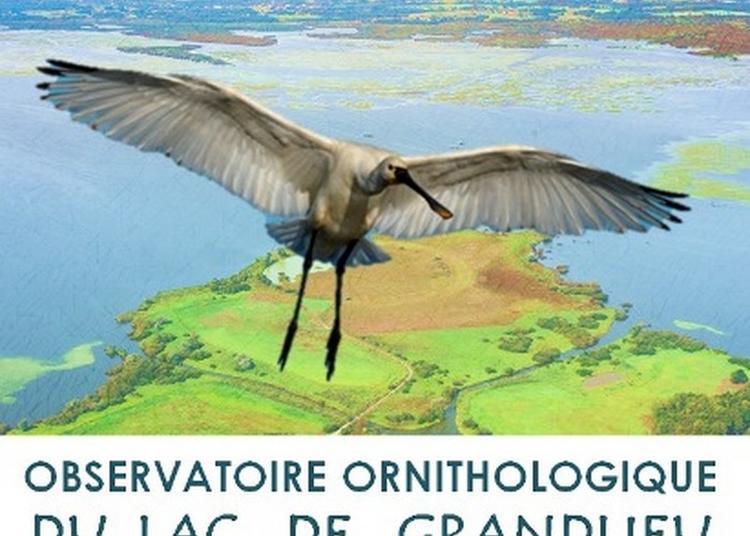 Observatoire Ornithologique Du Lac De Grandlieu à La Chevroliere