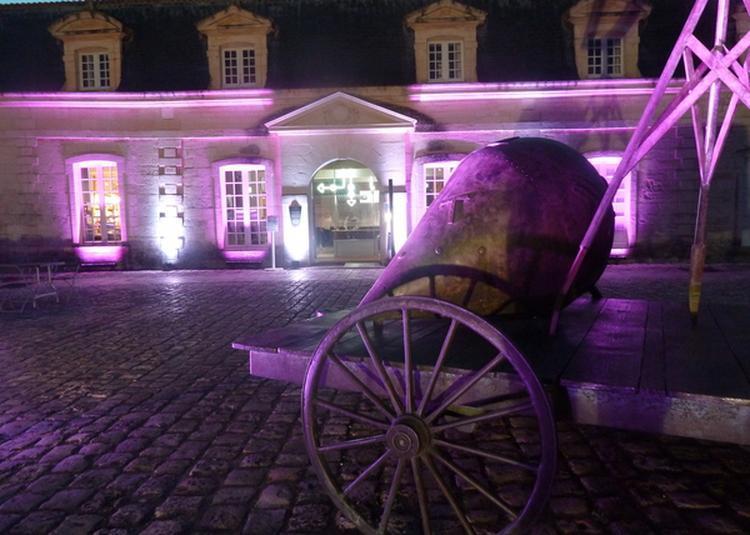 On Joue Sur Les Cordes ! Impromptus Musicaux à Rochefort