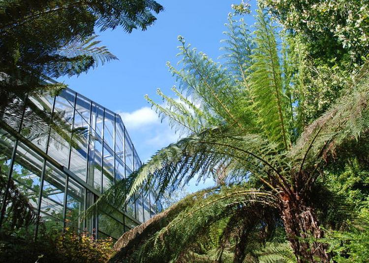 Ouverture Exceptionnelle Des Serres Tropicales à Brest