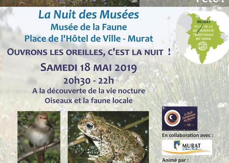 Ouvrons Les Oreilles, C'est La Nuit ! A La Découverte De La Vie Nocturne, Oiseaux Et Faune Locale à Murat