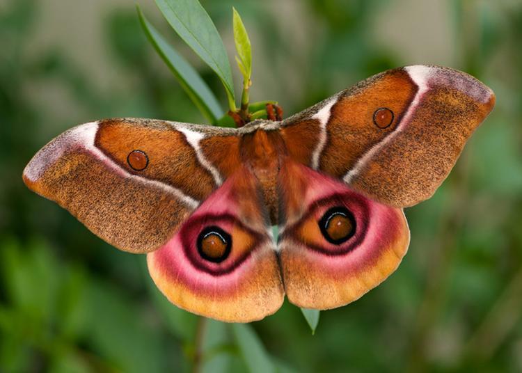 Papillon De Nuit à Nice