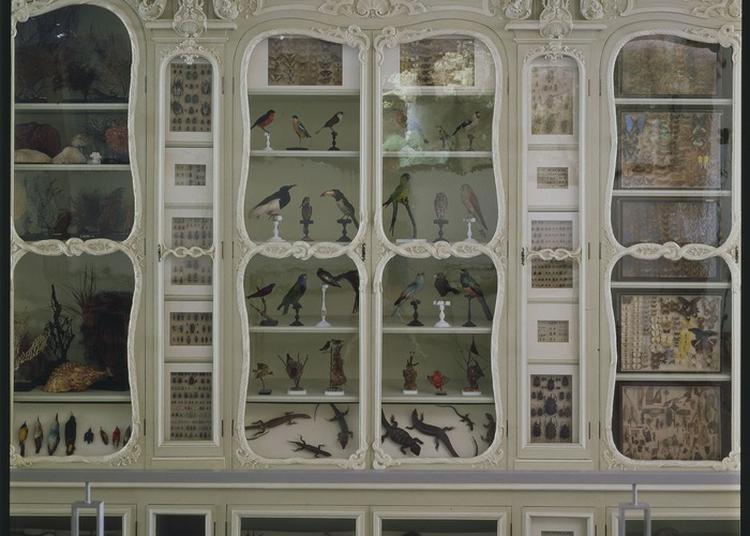Parcours-découverte : Le Bestiaire Sculpté Du Jardin Des Plantes à Paris 5ème