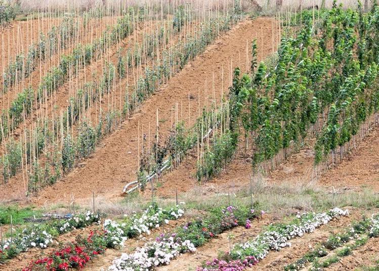 Patrimoine Végétal En Pépinière: Comment Multiplie-t-on Les Arbres? à Lanfroicourt