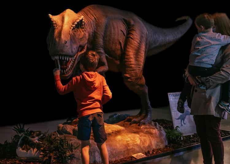 Gouvier Expo : dinosaures, fossiles et préhistoire à Martigne Ferchaud