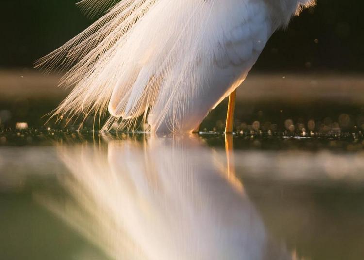 Photos d'ailes #2 à Les Pavillons Sous Bois