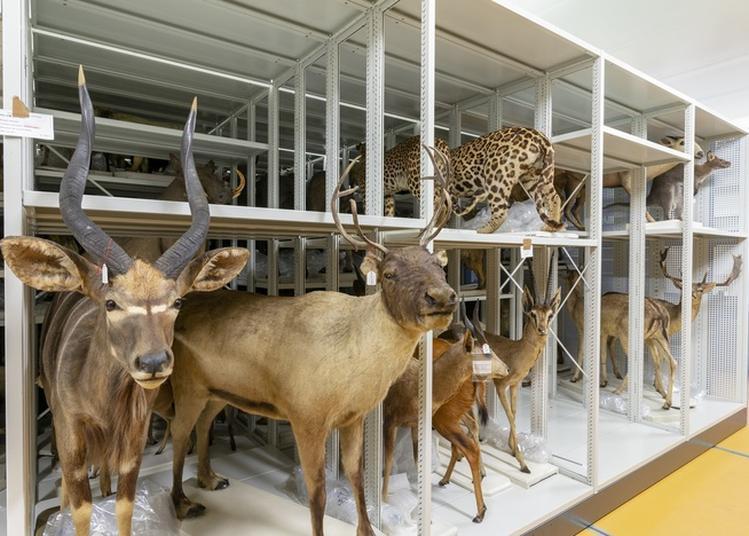 Plongez Au Coeur Des Collections Du Muséum De Bordeaux !