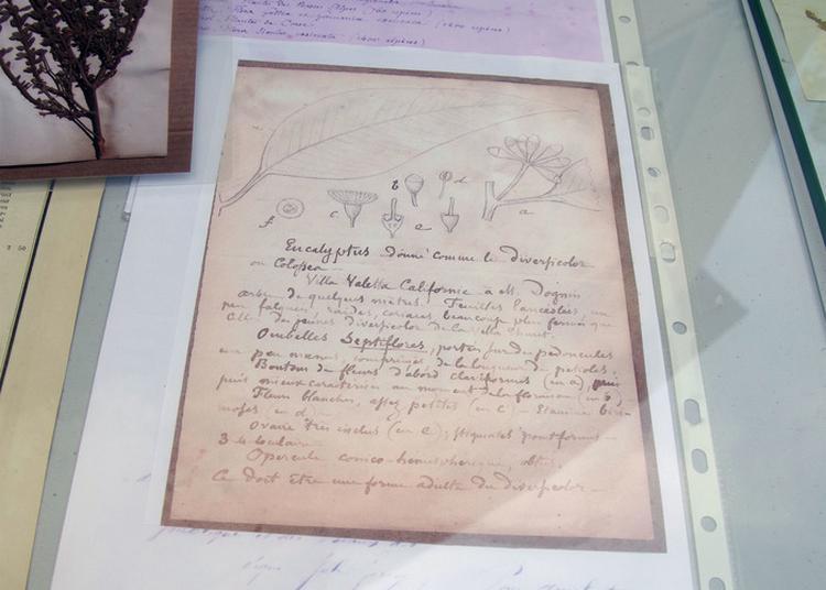 Présentation De La Restauration De L'herbier Historique De Monsieur Thuret à Antibes