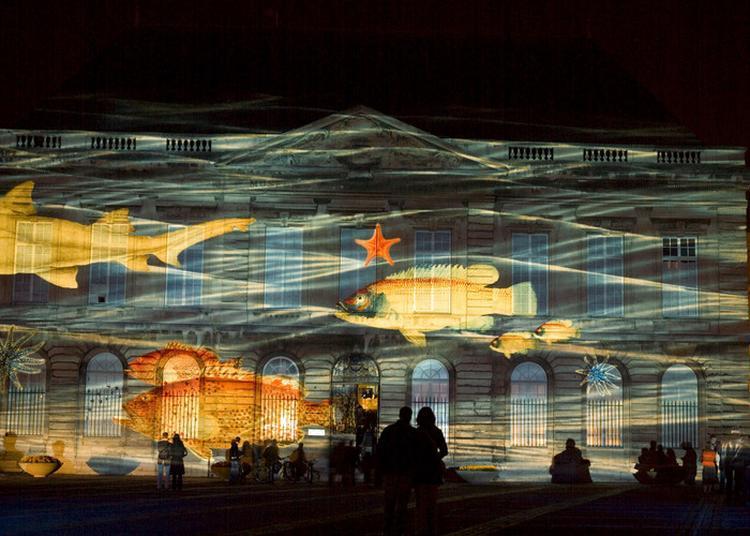 Projection Nocturne Sur La Façade Du Muséum à Le Havre
