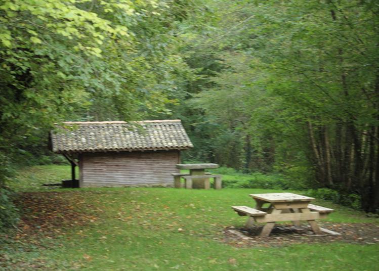 Promenade Libre En Forêt à Melle