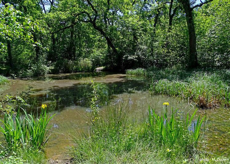 Promenade Naturaliste Et Exposition Par La Société Linnéenne De Bordeaux à Talence