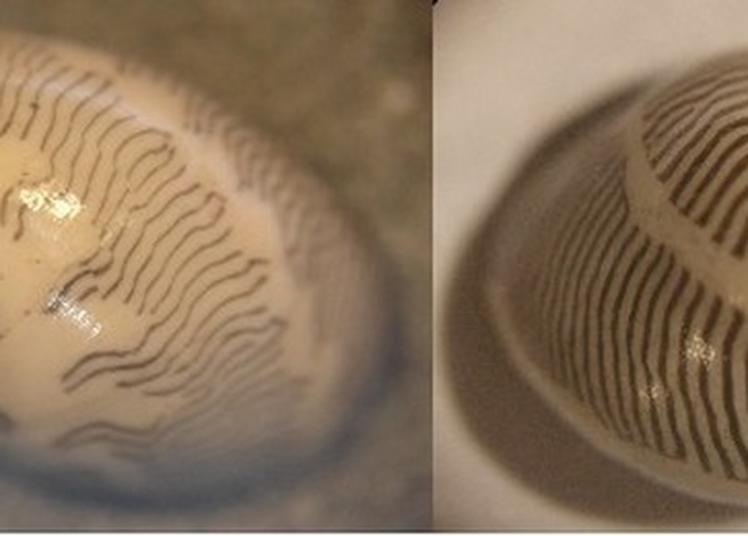 Quelques Fossiles Du Miocène De La Carrière Dite De «saint-martin-d'oney» Avec Jean-jacques Cladères, Paléontologue Amateur. à Dax