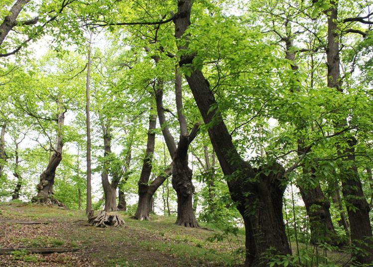 Rando-dégustations En Forêt De Montmorency