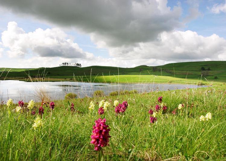 Rando'nature De La Réserve Naturelle Régionale Des Tourbières Du Jolan Et De La Gazelle à Segur les Villas